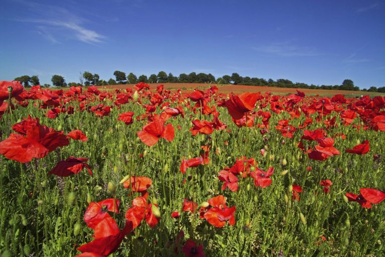 Remembrance Day Message From IVP Tom Reid